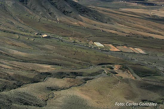 Gavias de Fuerteventura