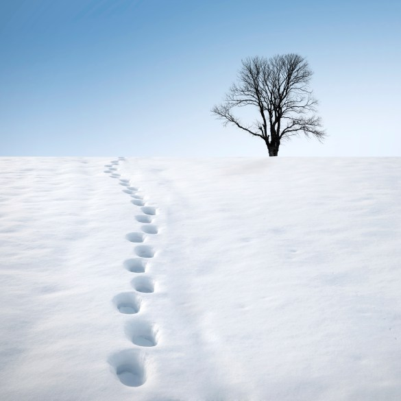 footprints in snow and tree