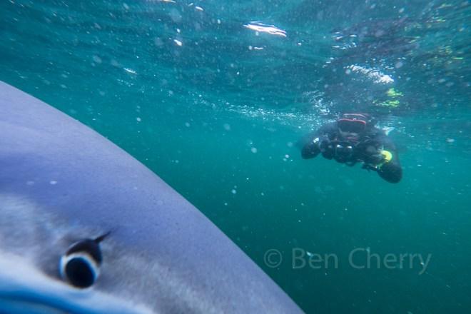 Blue Shark trip-7