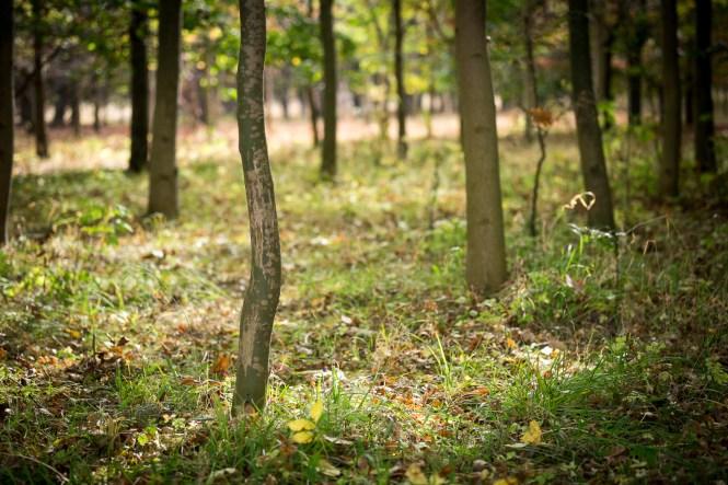 Woodland. 1/900sec at f/2.4, ISO 400