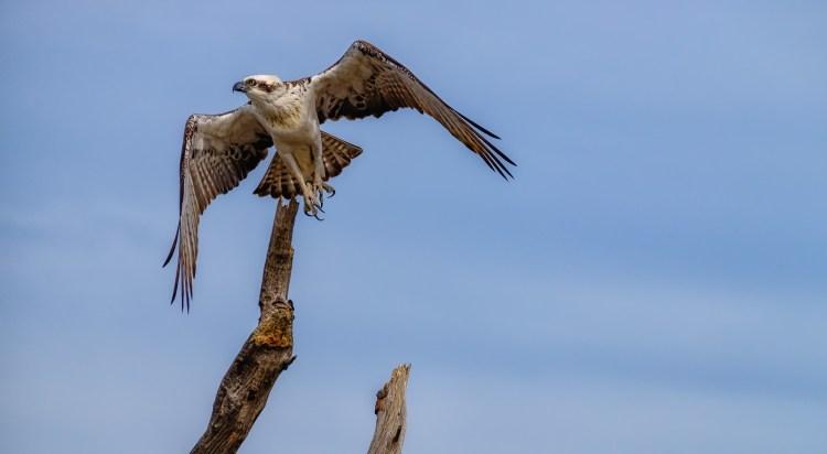Osprey_7668_FB-
