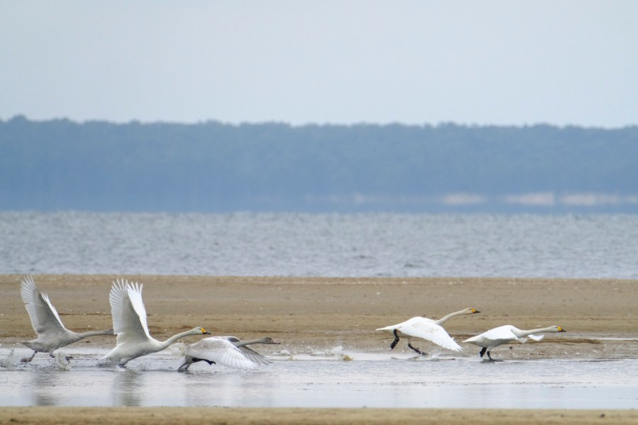 ben-cherry-flight-of-the-swans-baltics-6