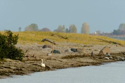 ben-cherry-flight-of-the-swans-baltics-15