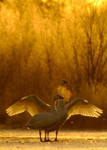 ben-cherry-flight-of-the-swans-germany-36