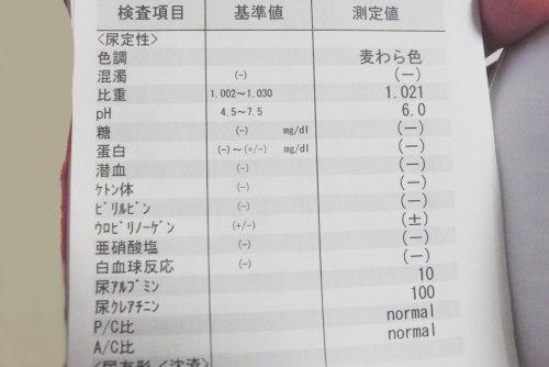写真_尿検査結果書類