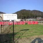 本陣跡からむらさき麦と関山神社をのぞむ