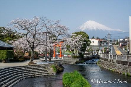 浅間大社の桜と富士山2018.3.29