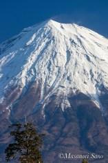 富士宮市中央図書館駐車場から浅間大社後背林越しに富士山を望む