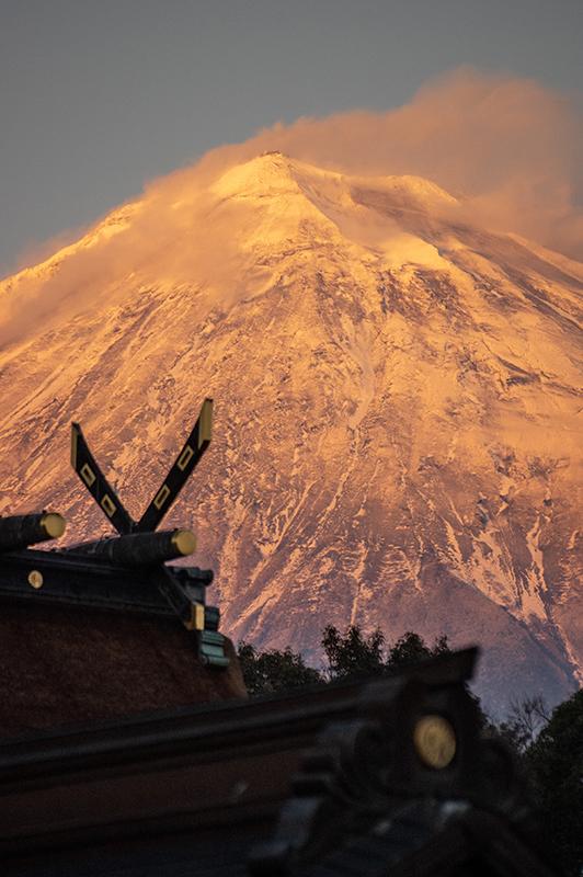 平成31年1月20日 紅富士