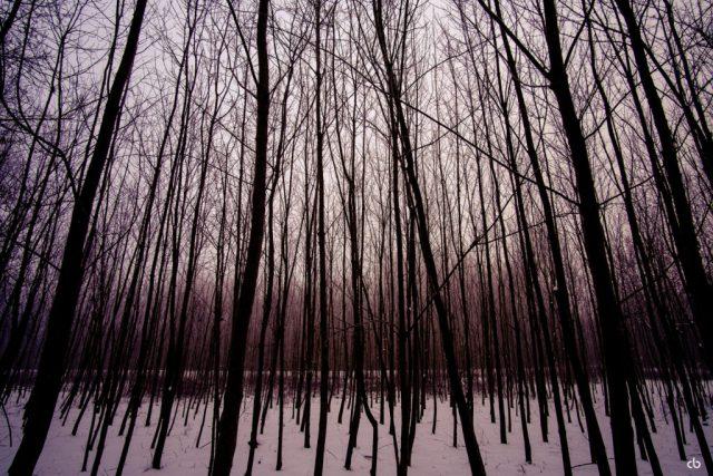 Blairwitch-Forest | Fujifilm | X-T1 | 12mm