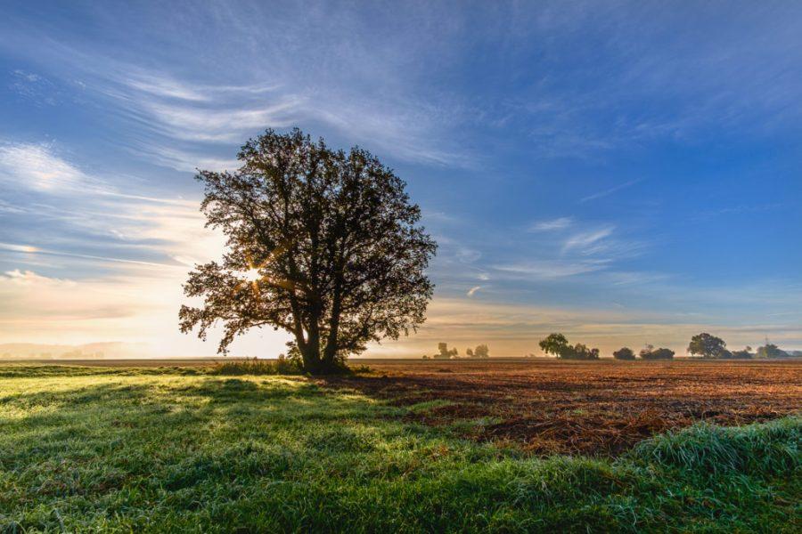 Herbstsonne | Fujifilm | X-T1 | 12mm