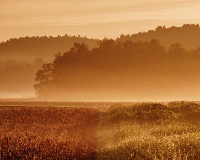 MorgenNebel | Fujifilm | X-T1 | 50-140mm