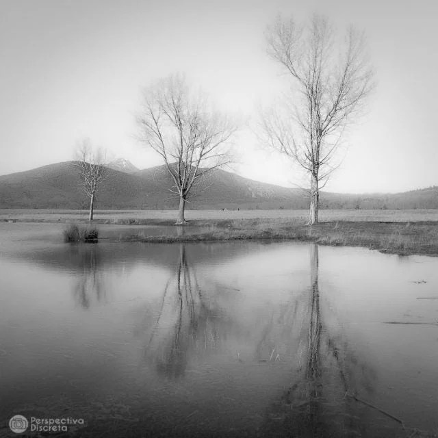 """Three Trees"" por David Esteban, con Fuji X-E1."