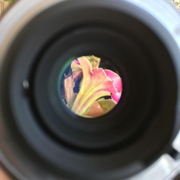 Imagen circular del objetivo