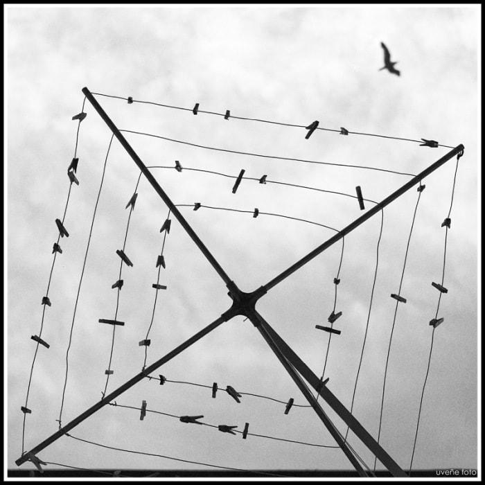 """""""El pájaro huído de su jaula"""" por Virgilio Hernando, con Fuji X-Pro2 + XF 35mm F2 R WR"""