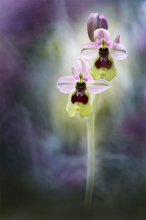"""""""Luz y color"""" por Fran Cegarra, con Fuji X-Pro2 + Olympus Zuiko 90mm f2 macro."""