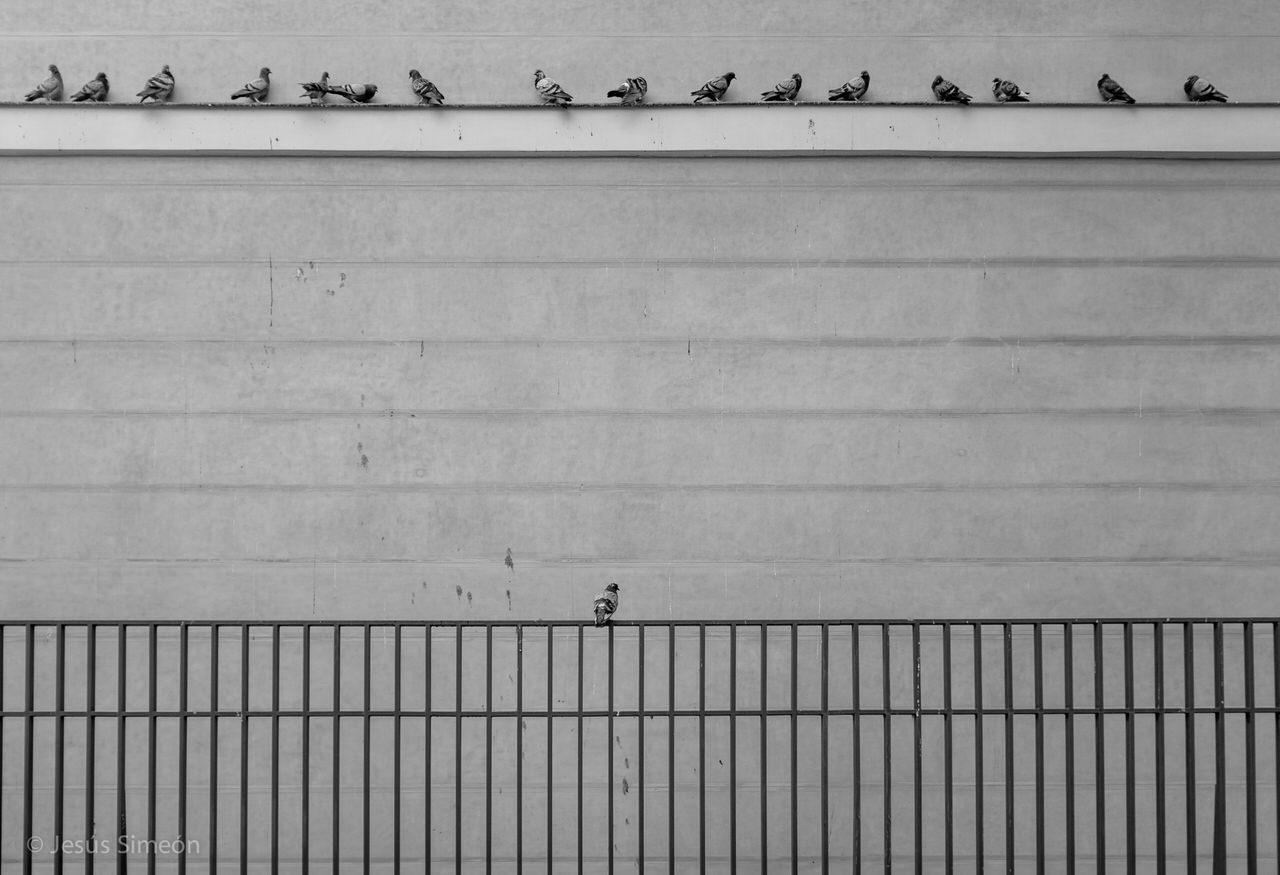 """""""Un público expectante"""" por Jesús Simeón."""