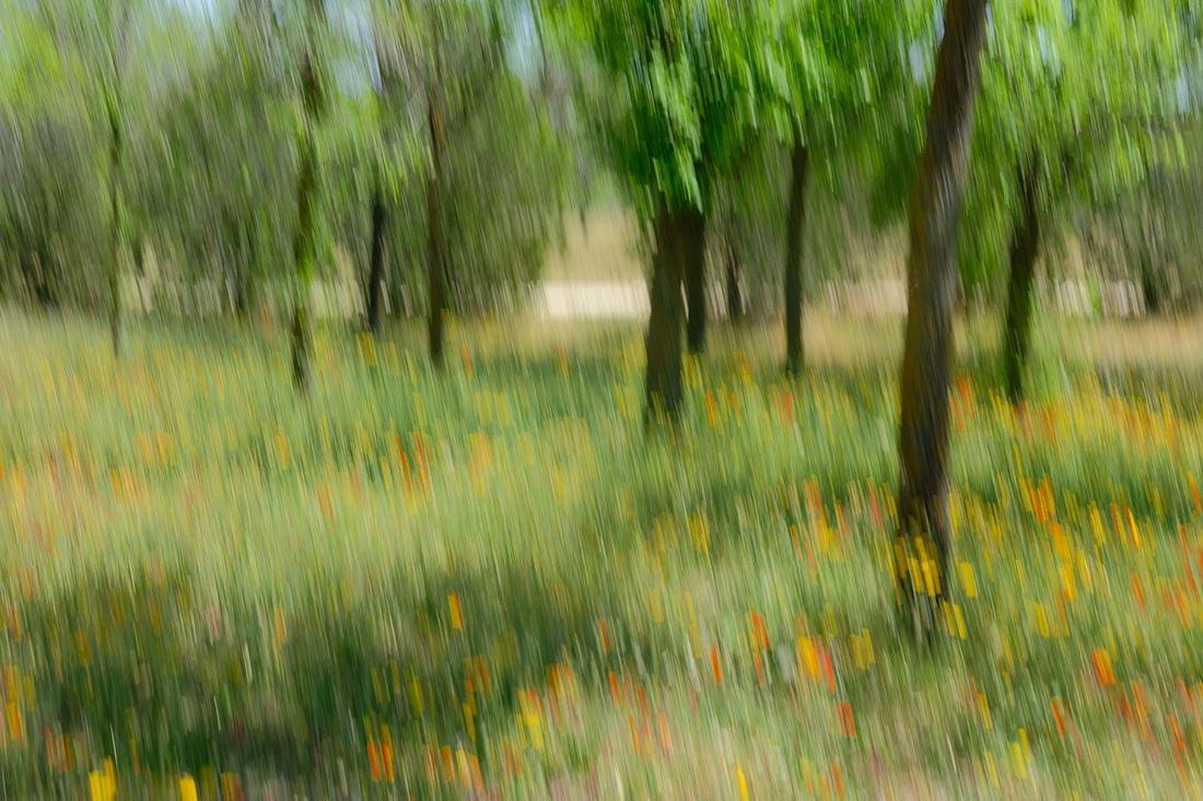"""""""Barrido Primaveral"""" por Teresa Clavijo. X-T2 + XF 35mm F2."""