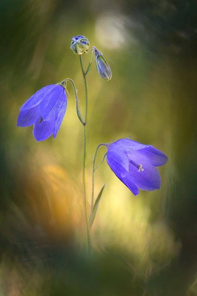 "Serie ""Flores"" de Fran Cegarra."