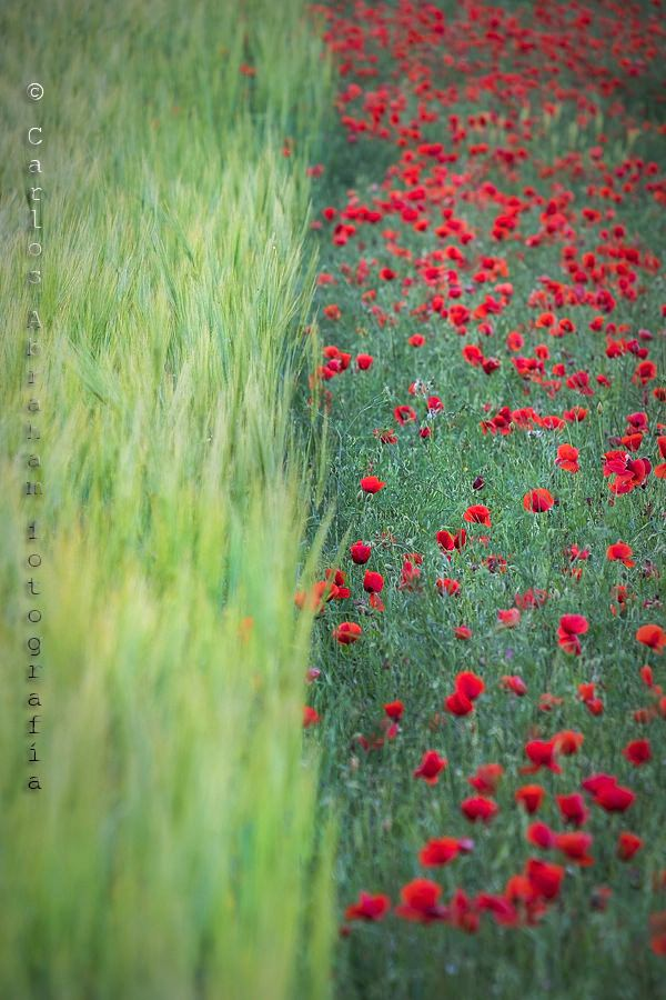"""""""Mitad y mitad"""" por Carlos Abraham. Fujifilm X-T2 + XF 55-200mm."""