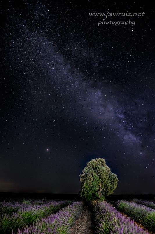 """""""Júpiter sobre la lavanda"""" por Carlos Rodríguez. Fujifilm X-T1 + Samyang 12mm F2."""