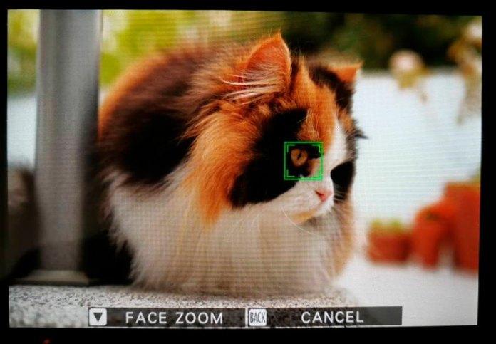 Detección ocularen la Fuji X-T3 (v. 3.00). Foto de Jose Viegas.