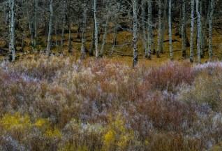 Eastern Sierra, CA; X-T1 by jack graham