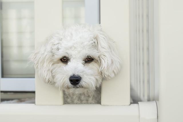 外を見ているる犬