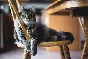 孤独な食事猫