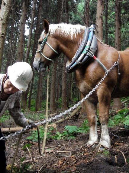 山から木を切り出して製材して縁台を作って町に風情をつくるワークショップ.2,5