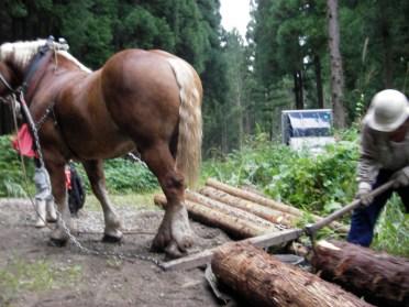 山から木を切り出して製材して縁台を作って町に風情をつくるワークショップ2