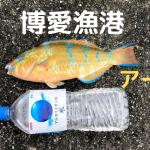 宮古島 博愛漁港にてアーガイゲット
