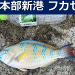【コロナ明け釣行】本部新港でフカセ釣り!40cmオーバーアーガイゲット