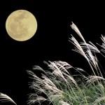 中秋の名月が満月とは限らない?お月見をする十五夜と十三夜とは?