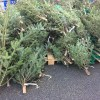 IKEAのクリスマスツリー2017年発売日と値段は?購入と持ち帰りの方法