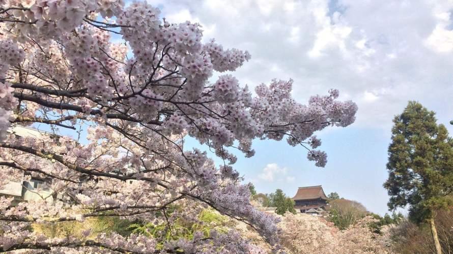 奈良・吉野のおすすめ<br />「吉野山の桜」超早朝か夕方がねらい目です。日中はカオス