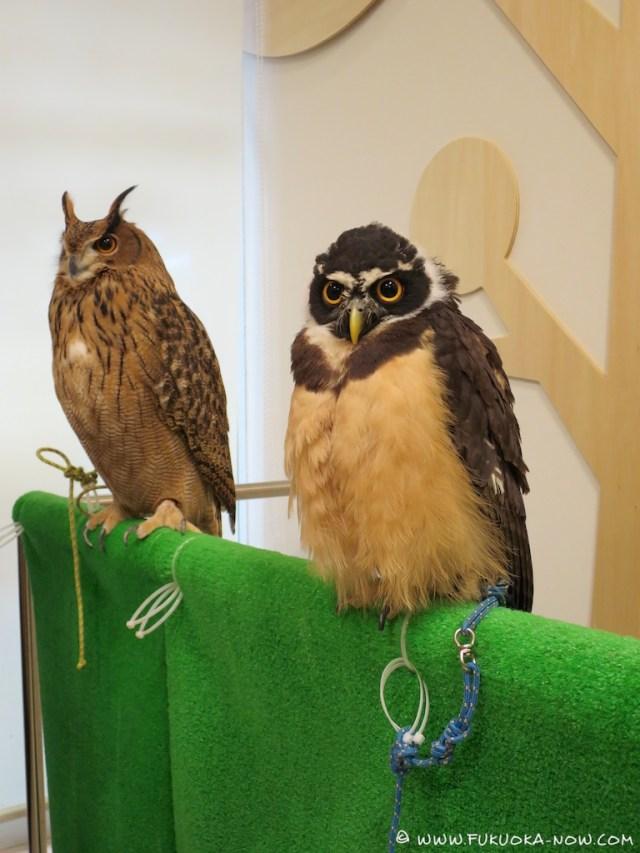 fn183 owl cafe 116