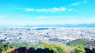 油山市民の森の桜・お花見 福岡定番の散策スポット!