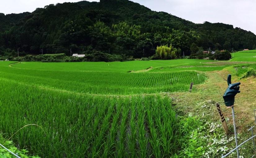井原山田園プロジェクトの取り組み