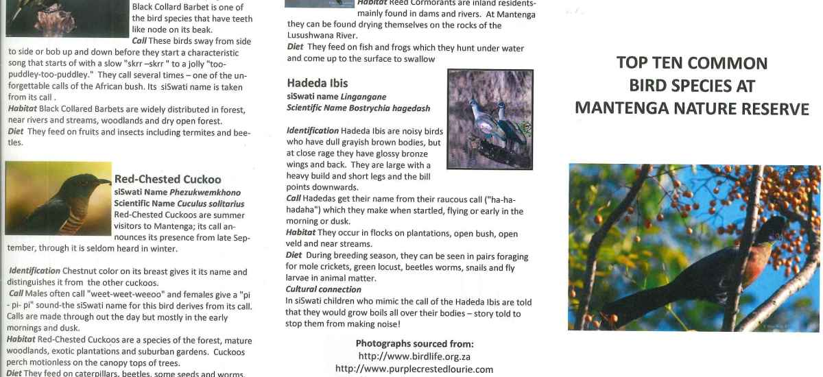 Birding Never Goes Out of Style – Laura Anne Macaluso – USA 2008