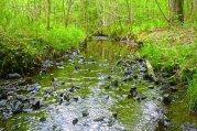 Creek picture