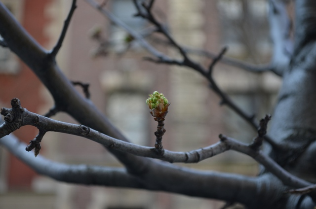 Spring in NYC Flowering Trees
