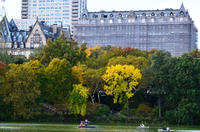Beautiful Fall Colors in Central Park