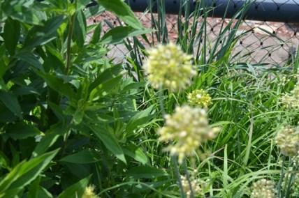 High Line Plant Life