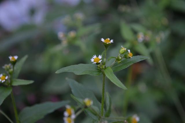 White Flowers In October