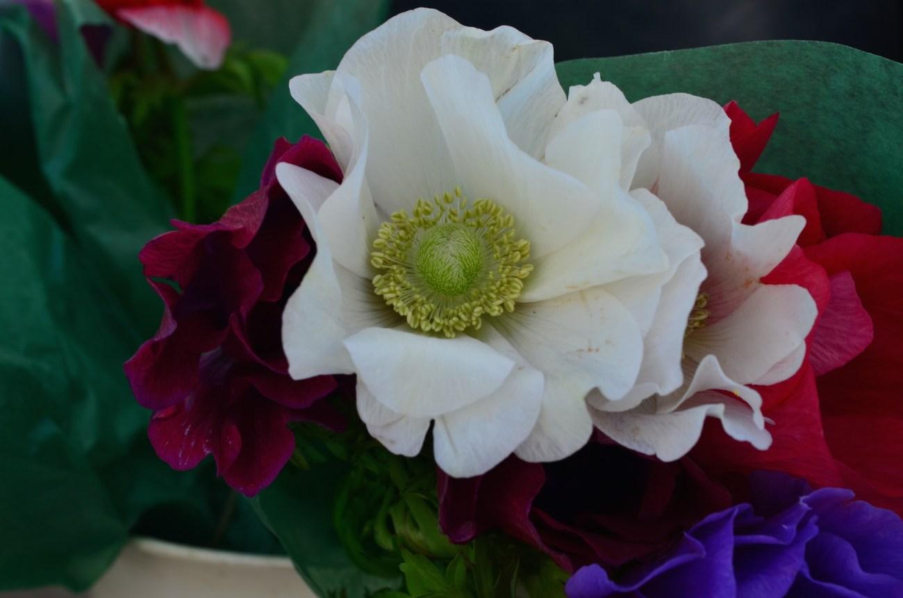 White Flowers in bloom