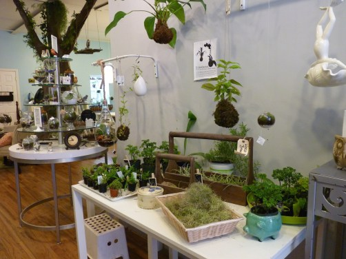 Twig Terrarium Store in Gowanus Brooklny