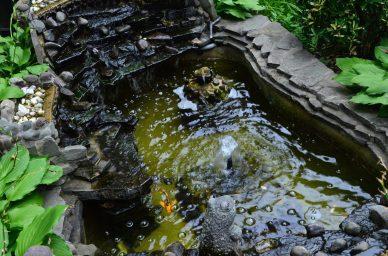 Koi Pond In Brooklyn Heights