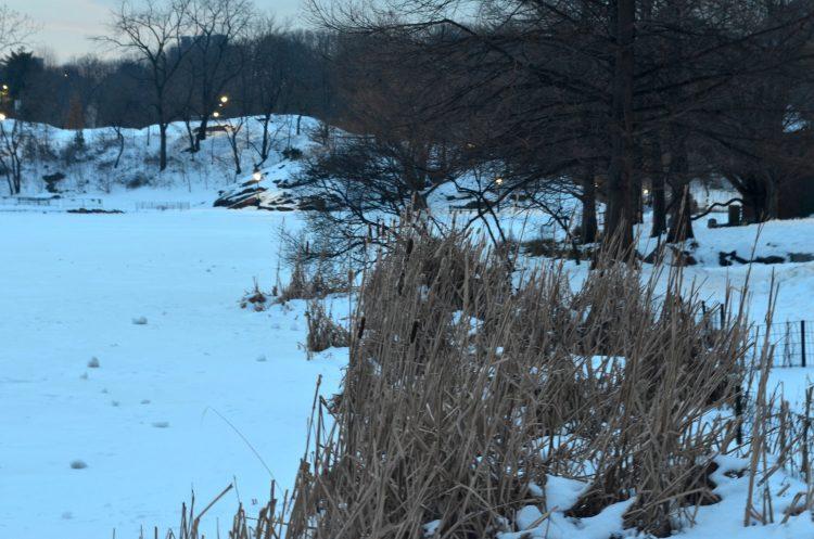 Meer Pond in Central Park