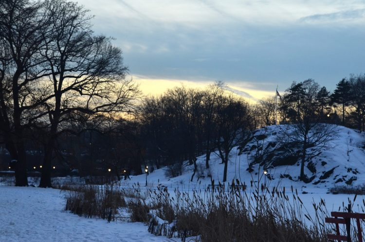 Central Park During the Evening